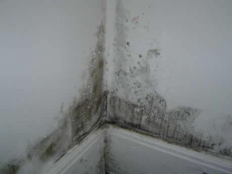 Zagrzybienie ścian w źle wentylowanym budynku nie wpłynie najlepiej na samopoczucie ani na zdrowie mieszkańców.