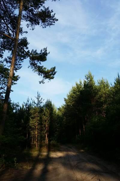 jakosc powietrza w lesie